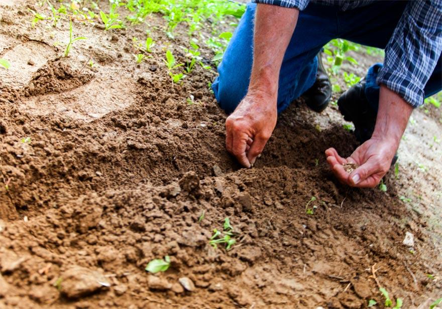 Der Garten als körperliche und geistige Energie-Tankstelle