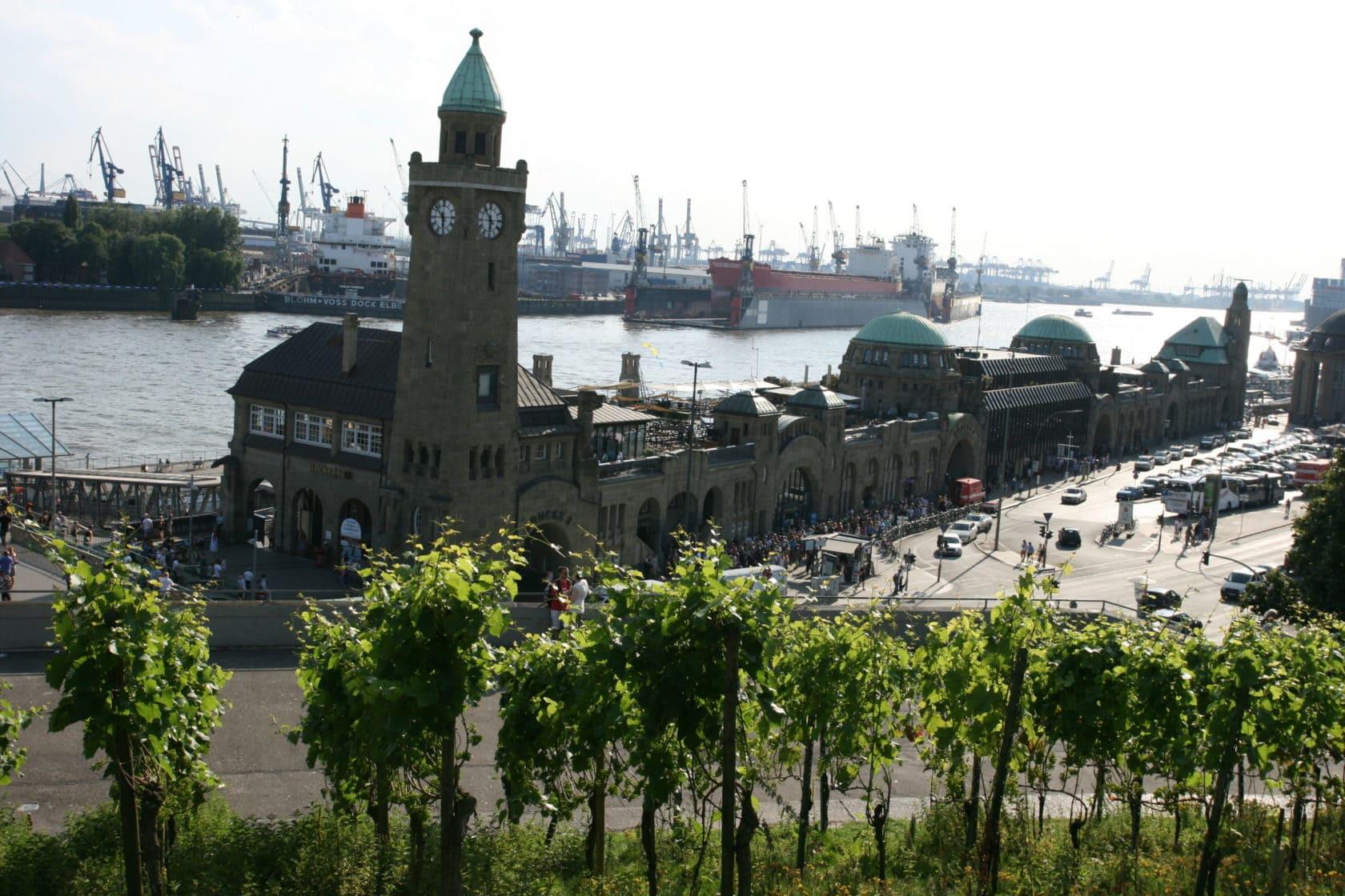 Rebstöcke am Hafen Hamburg