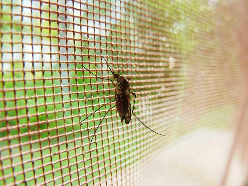 insektenstiche