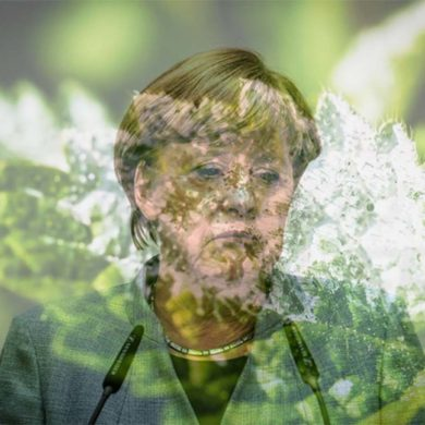 Merkel hat Mehltau wachsen lassen
